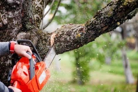 Extração, Plantio e Poda de Árvores